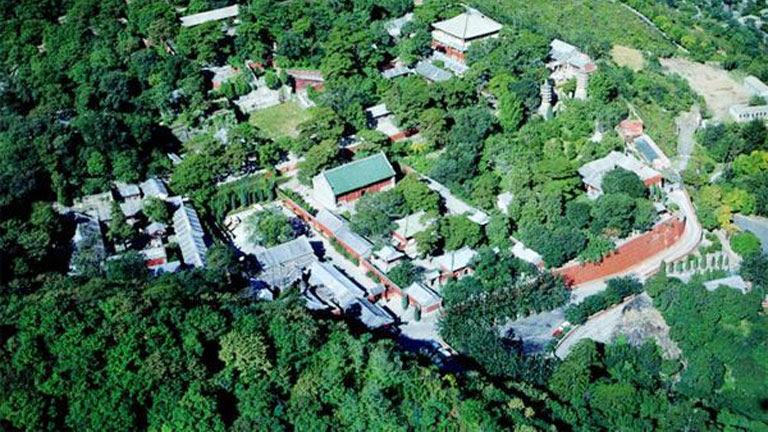 Beijing'in Yüzde 42'si Ağaçlarla Kaplı